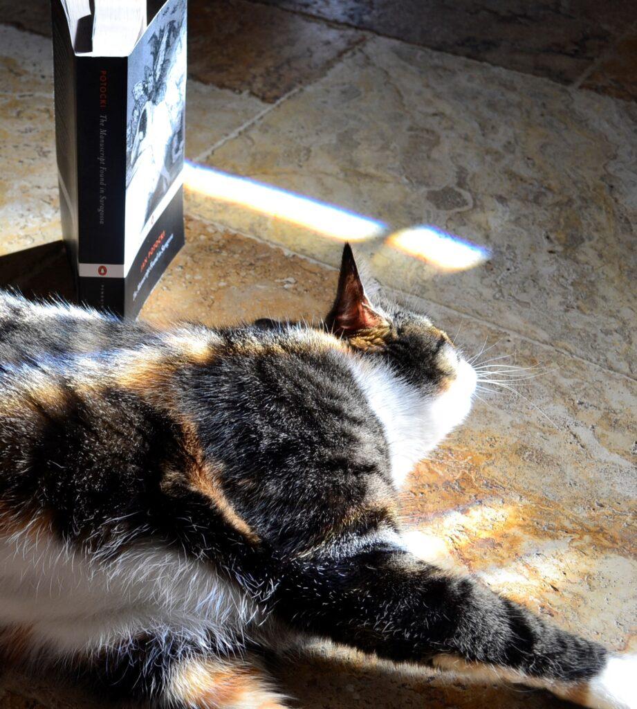 Jabberwocky sleeps in the sunshine beside the spine of The Manuscript Found in Saragossa.