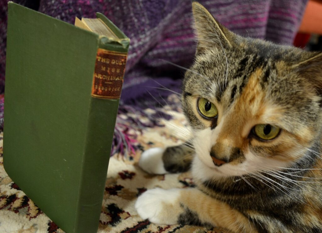 A calico tabby sits beside the green cover of The Dull Miss Archinard.