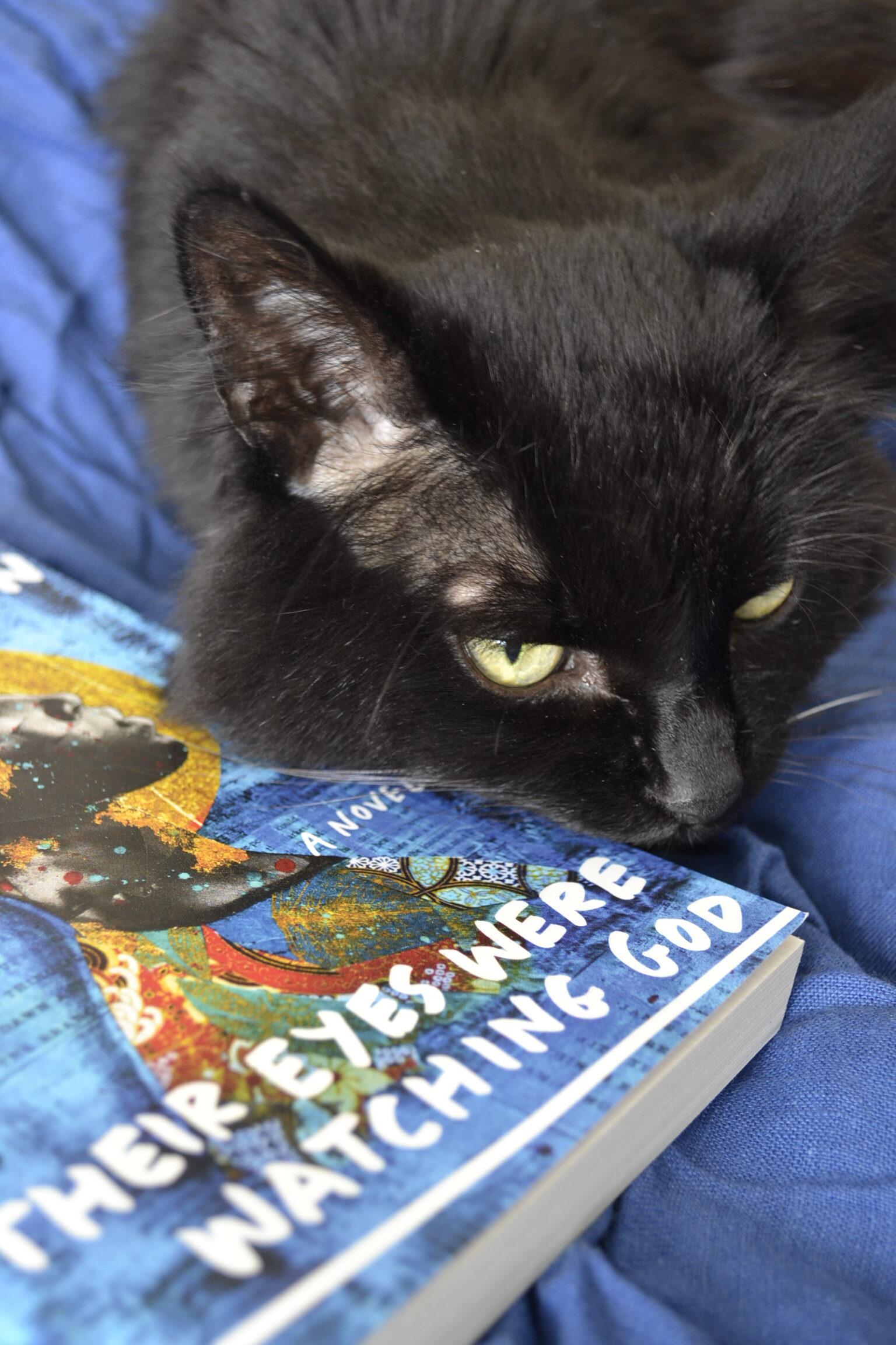 A black cat rubs a bright blue copy of Their Eyes Were Watching God.