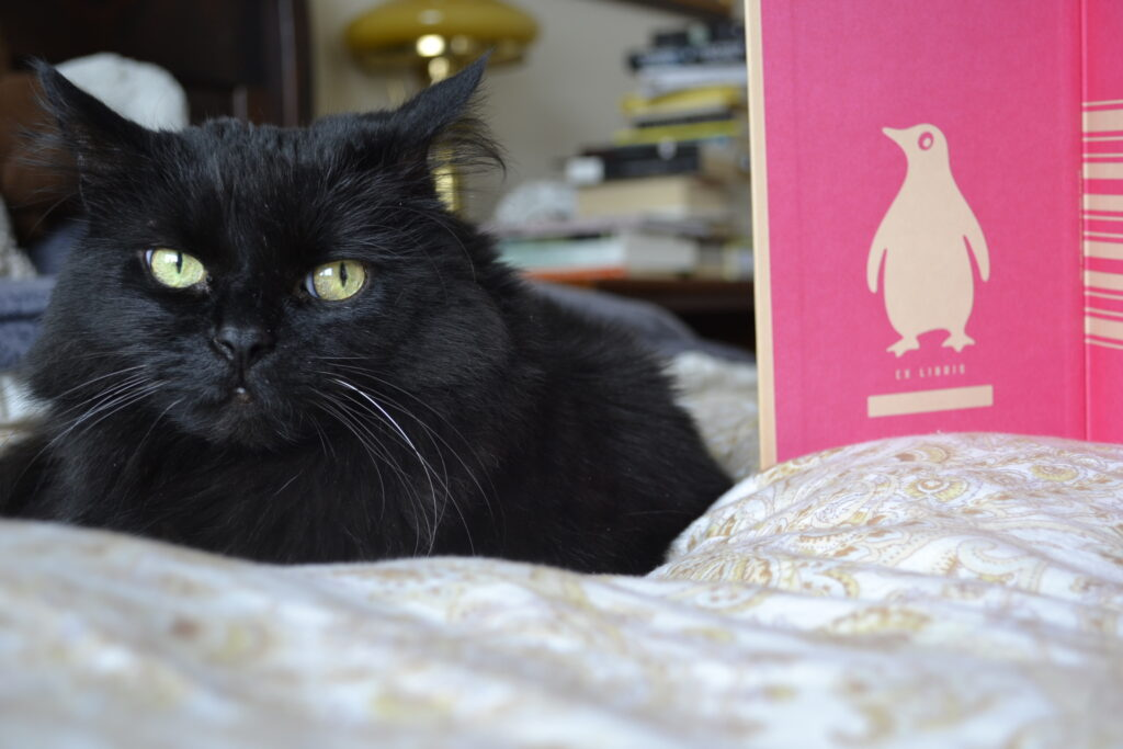 A black cat sits beside the pink interior of Passing.