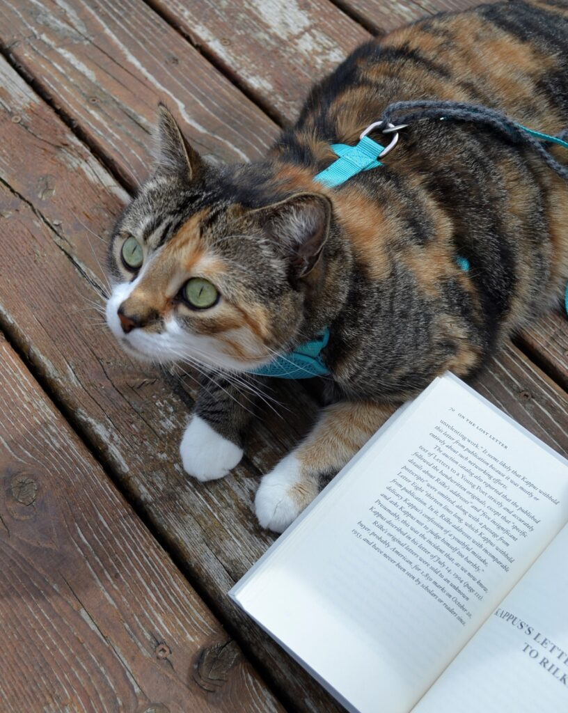 A calico tabby lays beside Letters to a Young Poet.