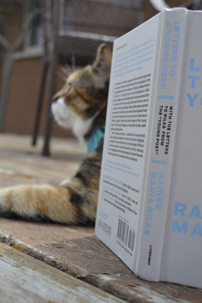 A calico tabby lays behind Letters to a Young Poet.