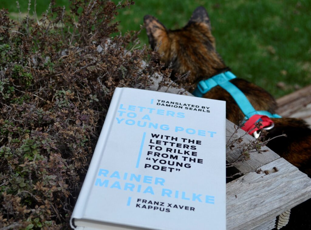 A tortoiseshell kitten sits beside Letters to a Young Poet.