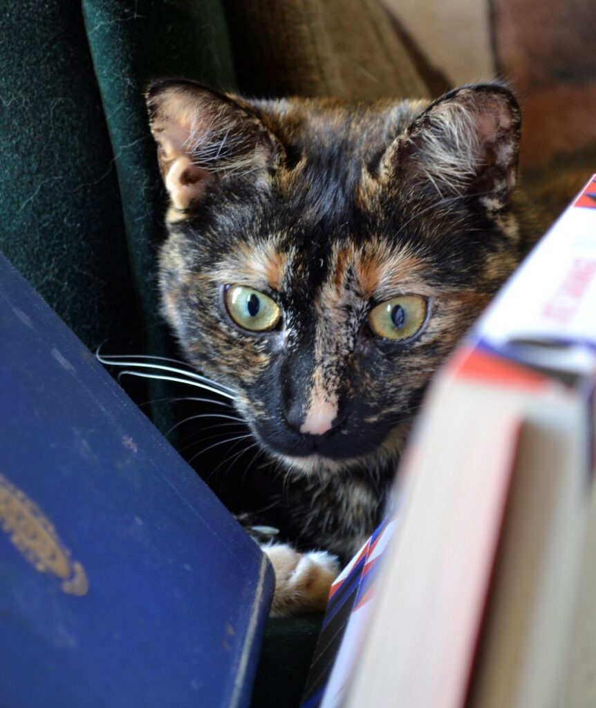 A tortoiseshell kitten peers between two fallen books.