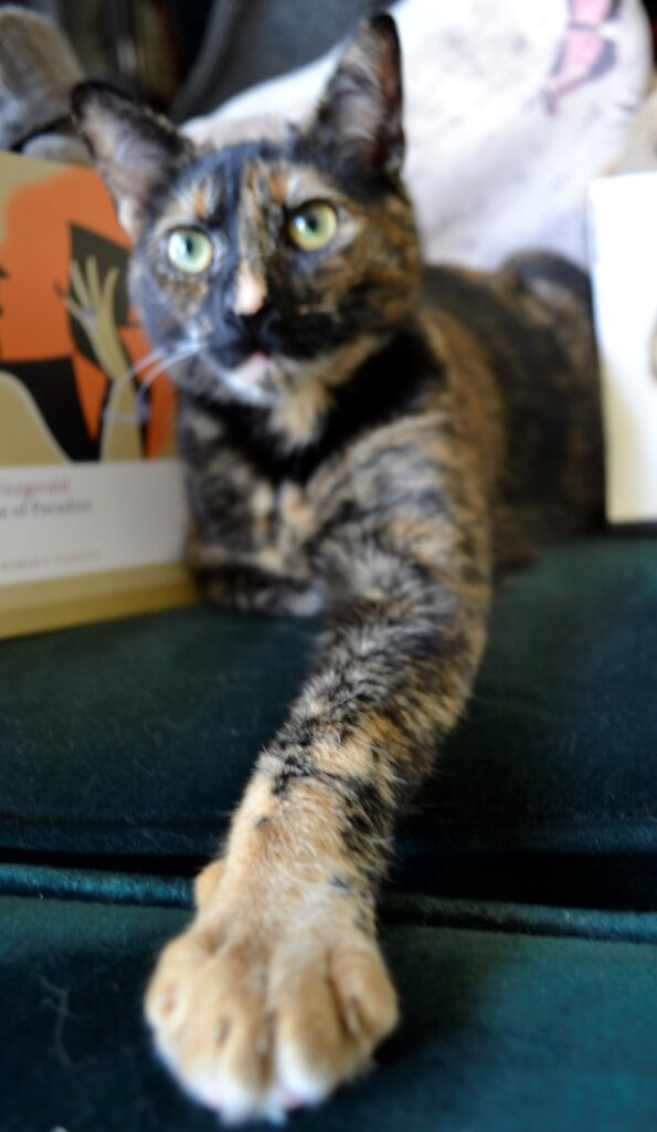 A tortoiseshell kitten reaches out its tan-coloured paw.