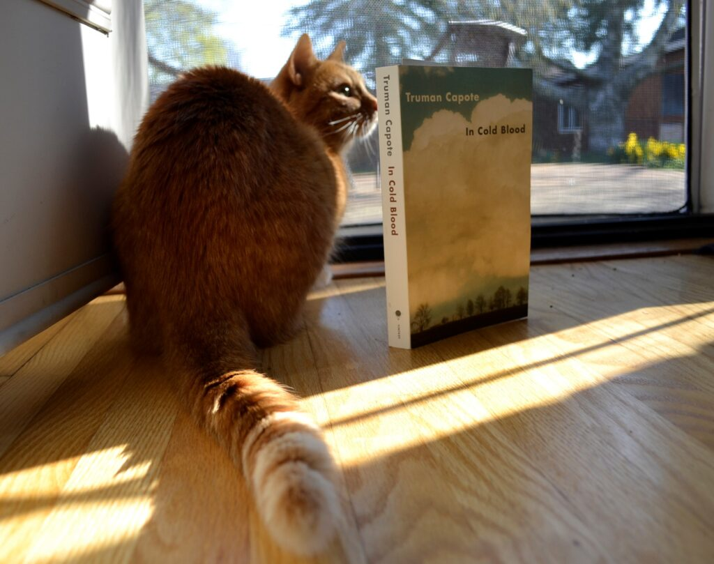 An orange tabby sits beside In Cold Blood.