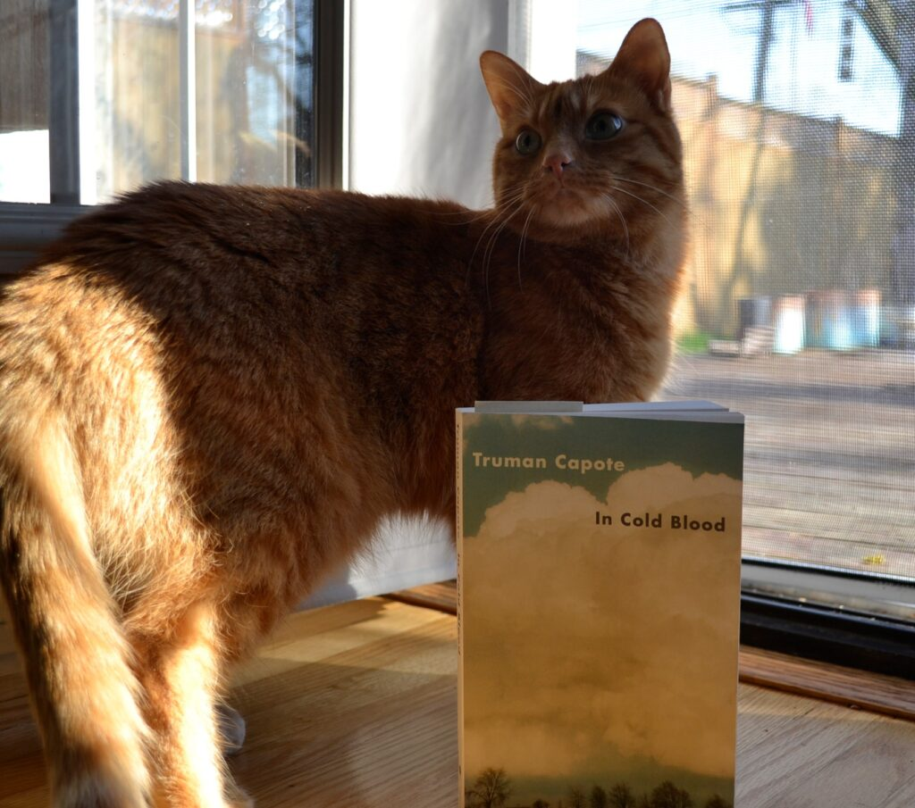 An orange tabby stands beside In Cold Blood.