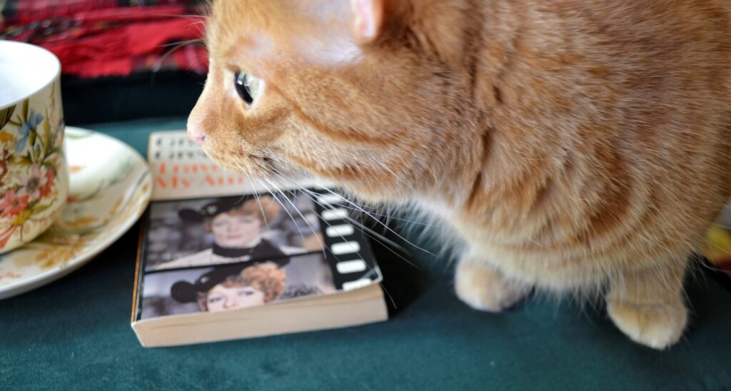 An orange tabby crouches beside Travels with My Aunt.
