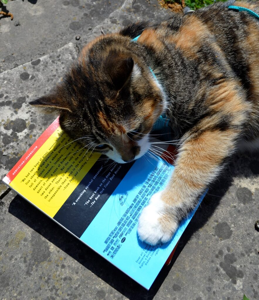 A calico tabby paws the bright cover of Fear and Loathing in Las Vegas.
