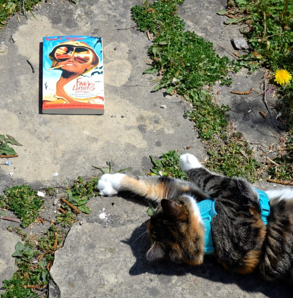 A calico tabby stretches beside Fear and Loathing in Las Vegas.