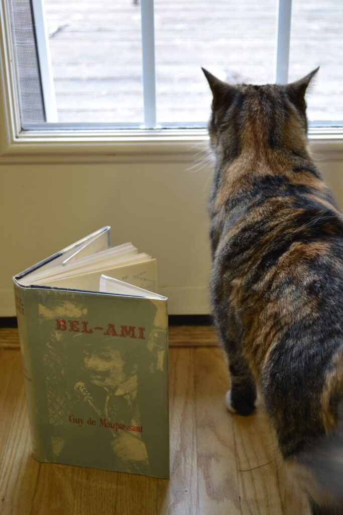 A calico tabby stands beside Bel-Ami.