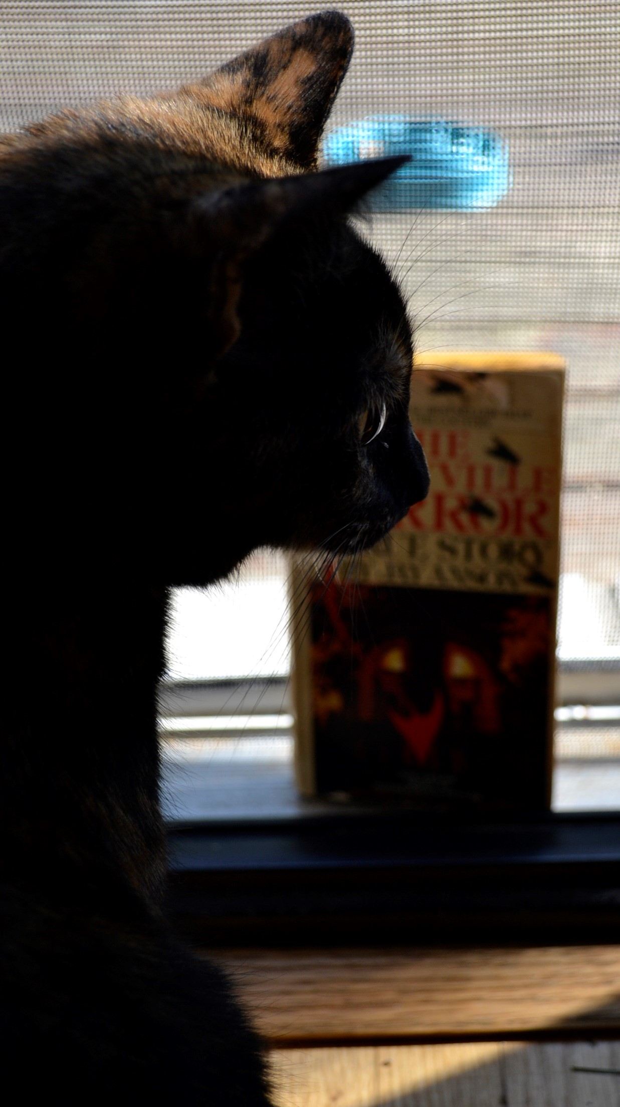 A tortoiseshell cat lurks in shadows in front of The Amityville Horror.
